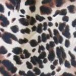 Misu leopard